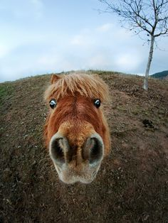 This is what short lenses do to horses. Funny, if you can get past the tragic implications!