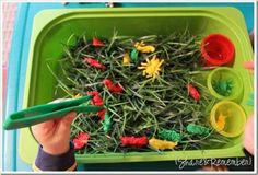 Bugs in the Grass Spring Play Bin is fun, fine motor and sensory play for little ones. Coloring sorting cups, tongs, little creepy crawly bugs in the grass spring play bin make it fun to explore and learn. Sensory Tubs, Sensory Boxes, Sensory Activities, Sensory Play, Preschool Activities, Sand And Water Table, Funky Fingers, Spring Theme, Spring Activities