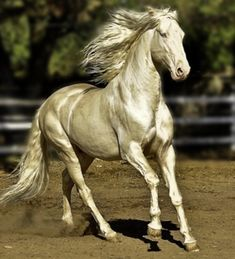 Le Akhal-Teke, l'une des plus belles races de chevaux [post_tags Most Beautiful Horses, Pretty Horses, Horse Love, Animals Beautiful, Beautiful Words, Brindle Horse, Horse Coat Colors, Akhal Teke Horses, Andalusian Horse