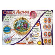 Lámina La Célula -> http://www.masterwise.cl/productos/6-ciencias/29-lamina-la-celula