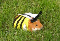 diy halloween . pet costumes - bumblebee piggy