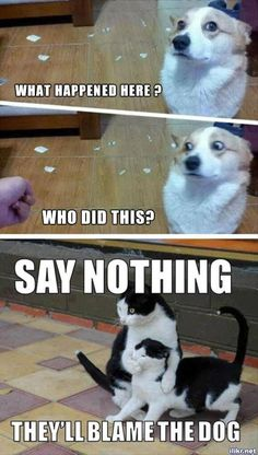 20 Super Funny Animal Memes Funny animals have always been an internet sensation. They've got what it takes to make us laugh, especially when they're turned into memes. Here are our collection of the most funny moments of animals of the internet. Funny Animal Jokes, Really Funny Memes, Stupid Funny Memes, Cute Funny Animals, Funny Relatable Memes, Funny Animal Pictures, Funny Dogs, Funny Stuff, Funny Quotes
