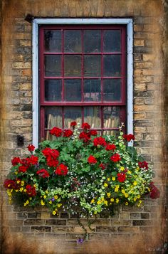 pictures of flower boxes | Window Flower Box