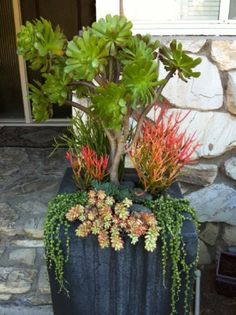 Ground Cover 43 Outstanding Succulent Gardens You Can Create at Home [ more at gardening.allwome ] Source The low succulents in this garden a Tall Succulents, Growing Succulents, Succulents In Containers, Container Plants, Container Gardening, Container Flowers, Indoor Gardening, Organic Gardening, Succulent Landscaping