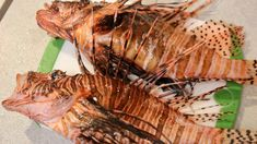 Lionfish Catch and Cook | Extremely Dangerous! Spread Awareness!