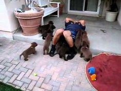 Adorable Puppies Go Into Attack Mode (VIDEO) | Cute Tube Videos