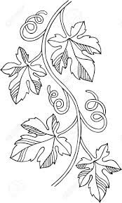 Image result for grape vines drawing
