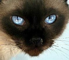 """""""It is in their eyes that the eyes that their magic resides"""" --Arthur Symons"""