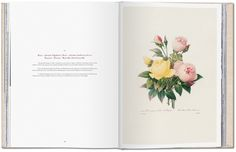 Redoute: Selection of the most beautiful flowers.
