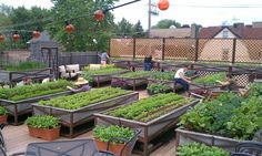 Marvelous Rooftop Vegetable Garden #1 Flower Garden May Also Be A Good Design For Your Rooftop Garden If