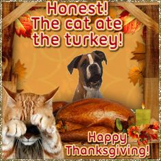 Funny Thanksgiving Gifs Free Download For Facebook