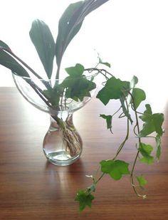 「ドラセナ4種 中級者 葉物 グリーンアレンジ 長持ち グリーンブーケ」の画像検索結果