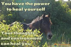 You have the power to heal yourself - Your thoughts and environment can heal you - Health Manifested  #healthmanifested #success #inspiration #motivation #believe #life #quote #dream #hope #mindfulness #LOA #lawofattraction #power #love #followme #happy #health #healing