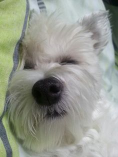 All day sleeping ;-)