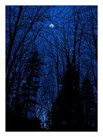 Cold Moon screenprinted art print by Dan McCarthy.  I love to look at the bright full moon...