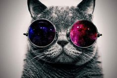 Space Cat Wallpaper Free For Desktop Wallpaper 1366 x 768 px KB hipster hipster cute Space Cat, Cool Cats, Space Glasses, Big Glasses, Glasses Funny, Capa Do Face, Image Swag, Chat Steampunk, Glasses Wallpaper