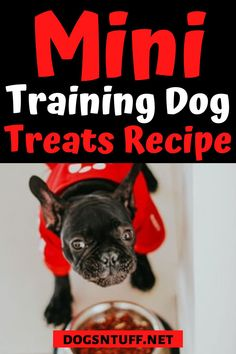All fur parents want the best for their pooch. So, why not make your own DIY Dog Training Mini Treats? It is a quick and easy recipe, plus you can control the sizes and ingredients based on your dog's need. #DIYDogTreats #DogTreats #NoBake #DogTreatsHomeMade Diy Dog Treats, Homemade Dog Treats, Dog Treat Recipes, Can Dogs Eat Bananas, Dog Facts, How To Make Diy, Small Dog Breeds, Dog Quotes, Dog Training Tips