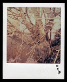 """Wallace Polsom, Rite of Spring (19 March 2017), instant photo taken with a vintage red-and-black Polaroid """"Cool Cam"""" and Impossible Project colour film for Polaroid 600-type cameras."""
