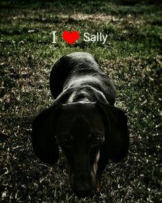Love Sally