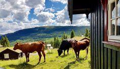 Sommer på Kvitfjell
