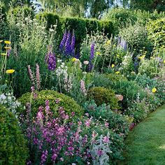 Stately delphiniums are the backbone of this colorful cottage garden plan.
