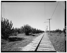 WILEY CITY LINE - TYPICAL RIGHT-OF-WAY THROUGH CONGDON ORCHARD PROPERTY, LOOKING WEST - Yakima Valley Transportation Company Interurban Railroad, Connecting towns of Yakima, Selah & Wiley City, Yakima, Yakima County, WA