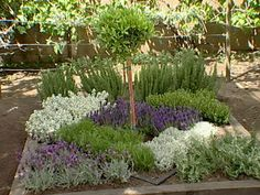 The gardening experts at DIYNetwork.com show you how to build an herbal knot garden, which will add beauty to your yard…