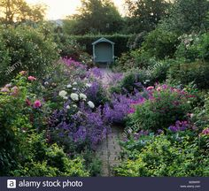 Wollerton Old Hall Shropshire Roses Nepeta Geraniums Peonies Small walled garden with path leading to covered seat Dawn light Stock Photo