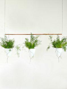 DIY contemporary indoor garden