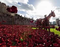 War Horse star Joey visits Tower of London poppies - Photos - 20 Oct 2014