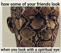 Fake Friend Quotes, Fake Friends, Spiritual Eyes, Spiritual Awakening, Snake Quotes, Snake In The Grass, Love Quotes, Inspirational Quotes, Strong Quotes