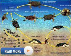 Kosgoda Turtle Hatchery - Sri Lanka - turtle conservation centre Turtle Hatchery, Turtle Conservation, Tortoise Turtle, Turtles, Sri Lanka, Centre, Asia, Beach, Life