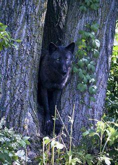 Seacrrest Wolf Preserve Photo
