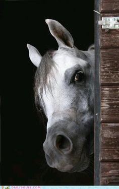 ".Just ""horsin'"" around."