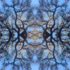 Flowering tree reflecting the balance of beauty. Photo by Amanda Bransgrove Flowering Trees, Amanda, City Photo, Reflection, Landscapes, Flowers, Beauty, Art, Paisajes