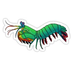 A friendly Mantis Shrimp to be your companion throughout the day! • Also buy this artwork on stickers, apparel, phone cases, and more.