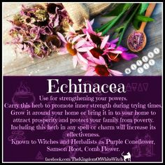 Echinacea – Witches Of The Craft® Healing Herbs, Medicinal Plants, Natural Healing, Magic Herbs, Herbal Magic, Voodoo, Witch Herbs, Herbal Witch, Book Of Shadows