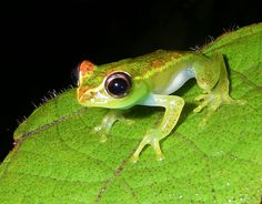 795c8076ad396 Killer frog disease hits Madagascar