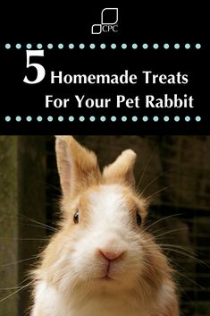 Try these simple to make homemade treats for your pet rabbit