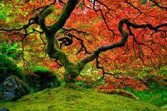 Resultado de imagen para imagenes de otoño