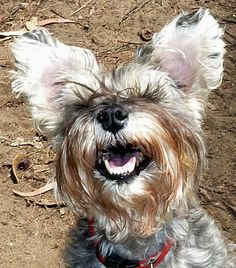 """smile... we're on the """"Your Pets, My Dogs"""" show with Lisa Smith-Putnam.  I <3 Radio"""