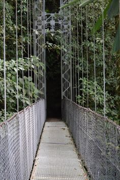 Arenal Hanging Bridges Park, Costa Rica