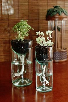 This DIY self watering planter is made from recycled wine bottles and requires o. - This DIY self watering planter is made from recycled wine bottles and requires o – Planters – I - Wine Bottle Planter, Recycled Wine Bottles, Wine Bottle Crafts, Diy Bottle, Glass Planter, Recycle Plastic Bottles, Bottle Terrarium, Plastic Bottle Crafts, Wine Bottle Garden