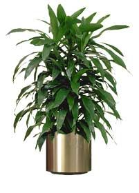 15 AIR-PURIFYING PLANTS
