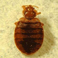 dezynsekcja ulv zwalczanie insektów ulv zwalczanie pluskwy ulv Cleaning Companies, Bed Bugs, Animals And Pets, Pets, Cleaning Services Company