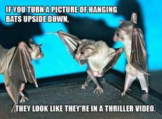 If you turn a picture of hanging bats upside down...
