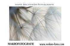 Die Fotos für das #makingof des Monats Januar sind ausgewählt und werden bald verschickt. http://www.makro-foto.com/the_making_of.htm
