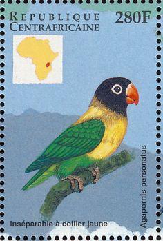 Rep. Centro-africana 1999 -   El Inseparable Enmascarado o Inseparable Cabecinegro