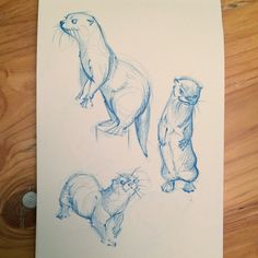 sketches of of otters in prismacolor pencil for practice | Samantha C George