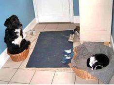 échange de panier entre chien et chat
